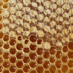 Можно ли есть мед в сотах вместе с воском