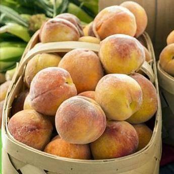 Особенности выращивания и ухода за сортом персика кремлёвский
