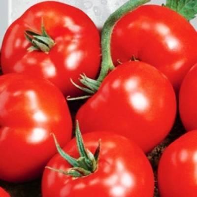 Описание раннеспелого сорта томата жаворонок и его характеристики