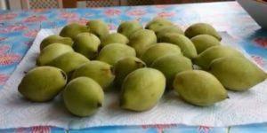 Листья маньчжурского ореха лечебные свойства