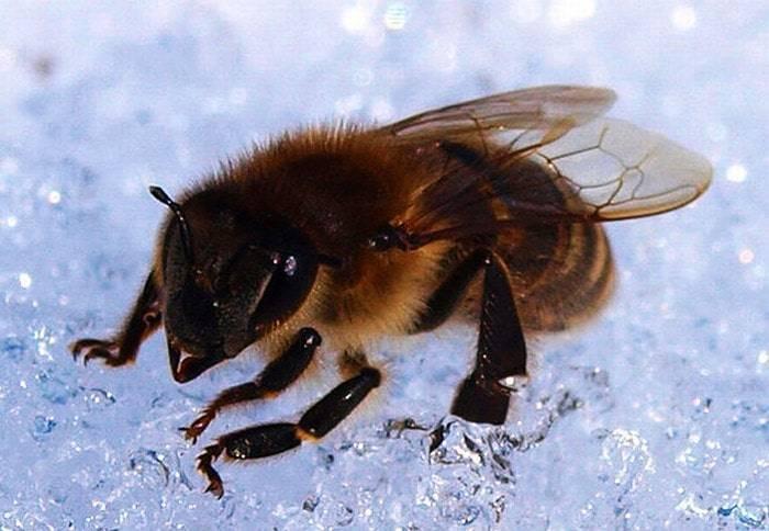 Мероприятия по подготовке пчел к зимовке