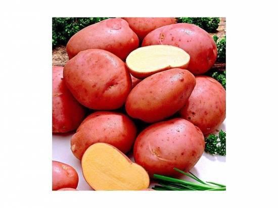 Картофель — романо — описание сорта, фото, подробная характеристика семенной картошки