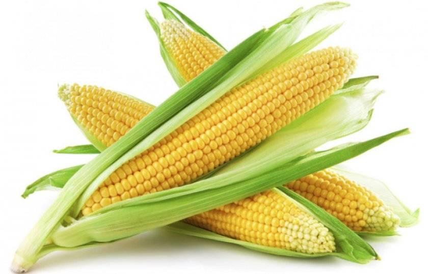 Как вырастить кукурузу?
