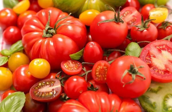 Список позднеспелых сортов томата, с подробным описанием характеристик