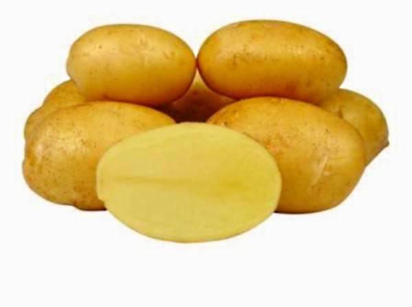 Картофель белая роза