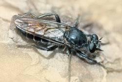 Виды болезней и вредителей пчел