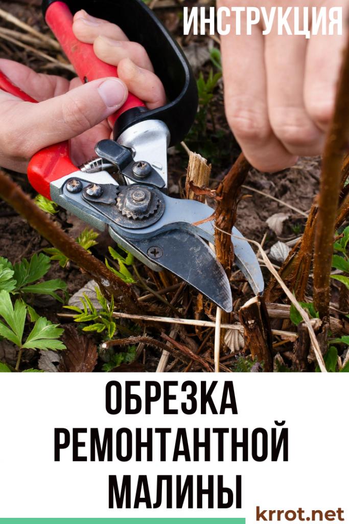 Как правильно сажать малину ремонтантную: общие рекомендации, схема, пошаговая инструкция