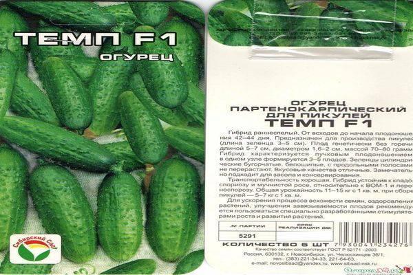 Гибрид огурцов «темп f1»: фото, видео, описание, посадка, характеристика, урожайность, отзывы