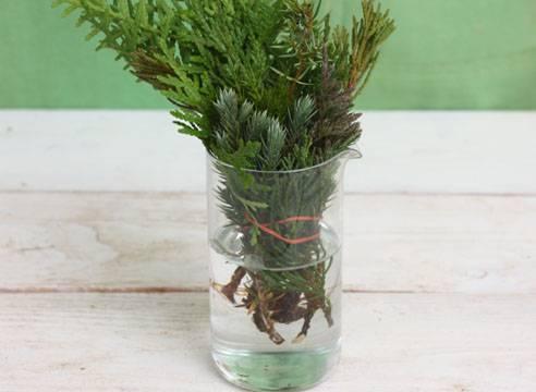 О черенковании можжевельника летом и осенью: как укоренятьи выращивать