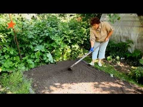 Репа - выращивание рассады из семян, уход, сроки посадок и хранение