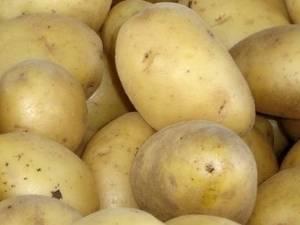 Картофель сынок описание сорта фото