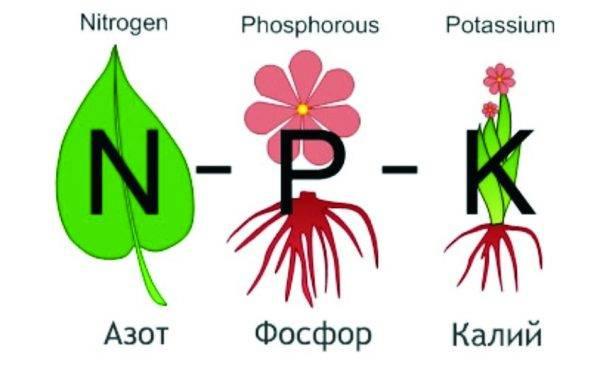 Азофоска - нормы внесения удобрения, как применять подкормку