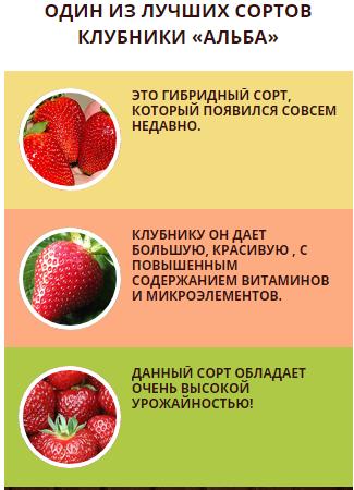 Клубника медовое лето — описание сорта, фото и отзывы садоводов