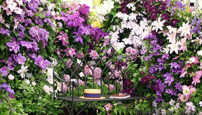 Белые клематисы (36 фото): описание кустовых и крупноцветковых сортов, названия мелкоцветковых и махровых клематисов