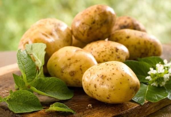 Все о популярном раннем сорте картофеля тулеевский: описание и фото, выращивание, уход и другие нюансы