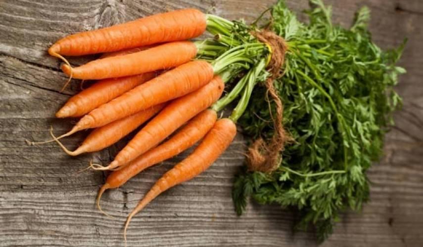 Морковь алтайская лакомка отзывы фото