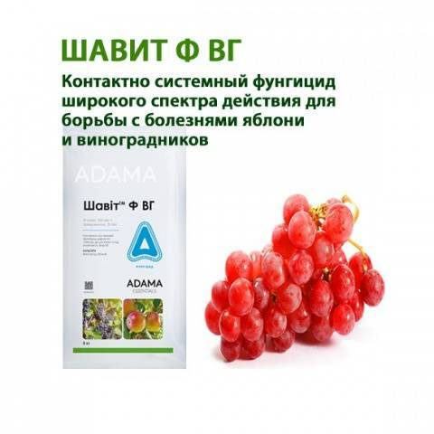 Фунгициды для обработки сада и виноградников