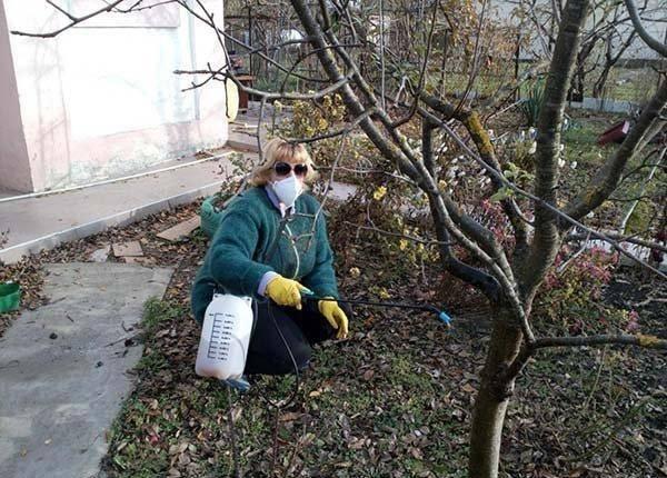 Когда обрабатывать плодовые деревья бордосской жидкостью. обработка сада осенью от болезней и вредителей