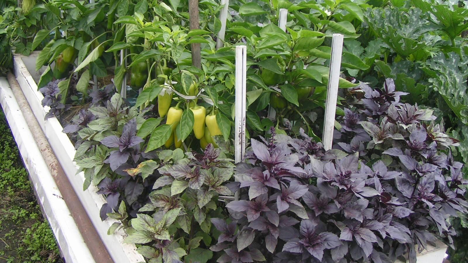 Смешанные посадки: выбираем лучших соседей для растений