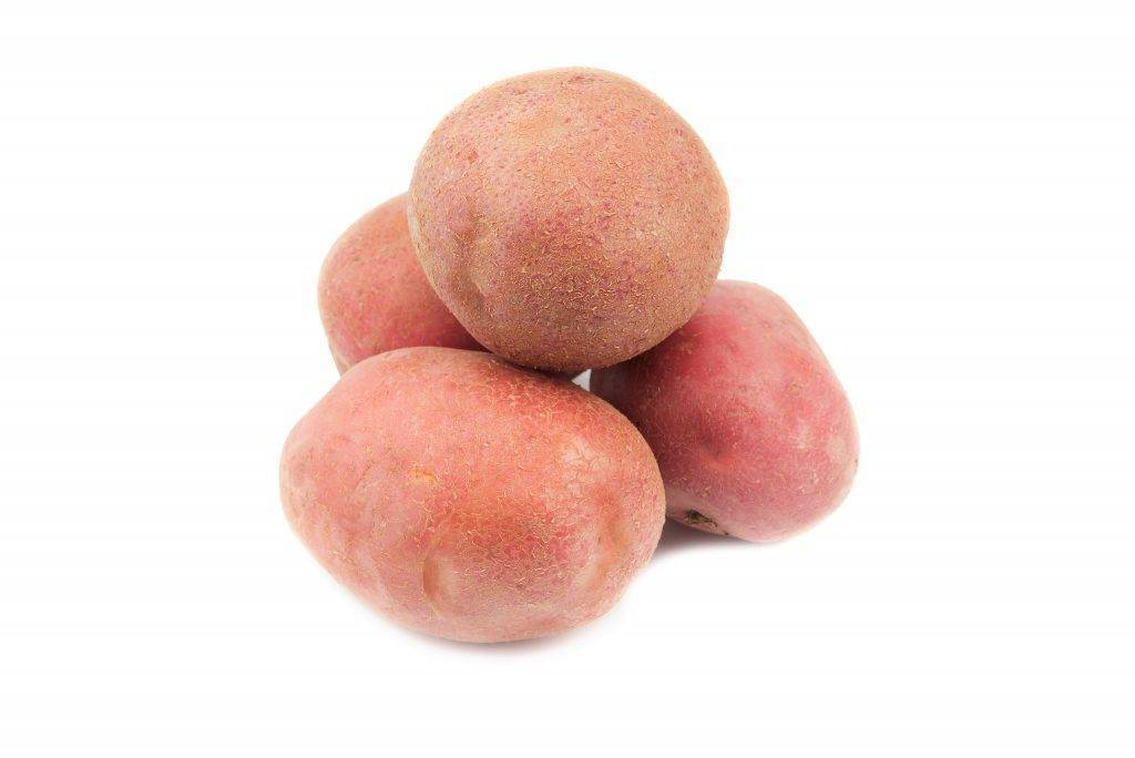 Выращиваем лапоть – народный картофель