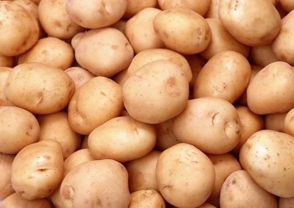 Картофель невский: характеристика и особенности выращивания