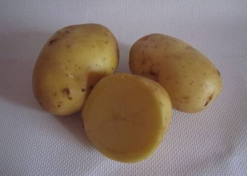 Картофель бриз сорт описание