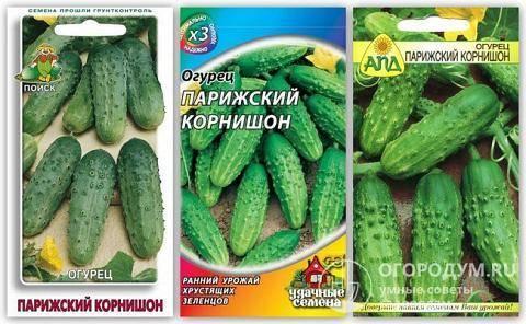 Парижский корнишон – вкусные огурцы для консервации. описание сорта и особенности его выращивания
