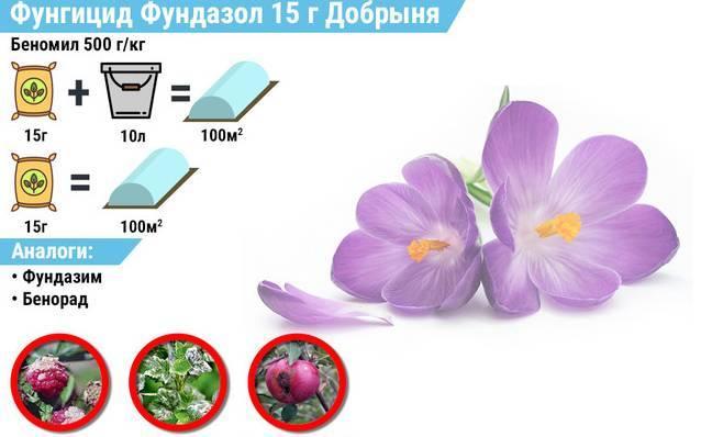 Можно ли разводить фундазол холодной водой. фундазол -препарат для лечения болезней растений, назначение, описание, способы применения