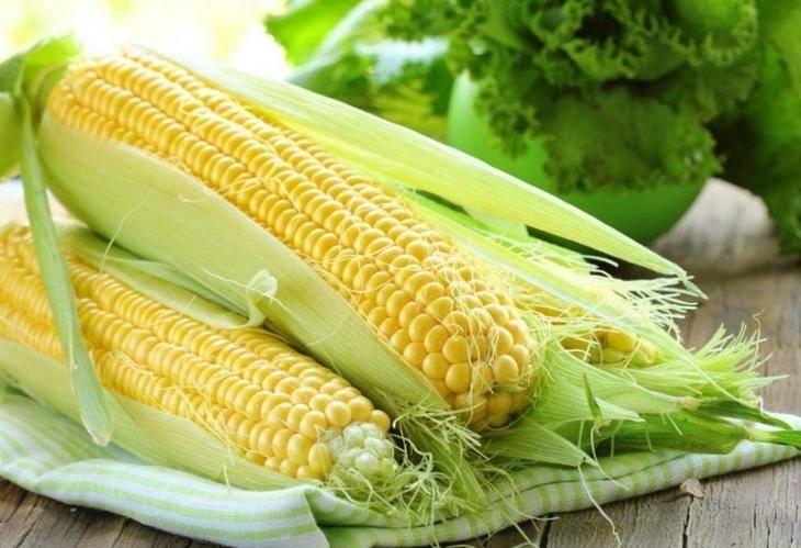 Описание и выращивание раннего, неприхотливого сорта кукурузы лакомка белогорья