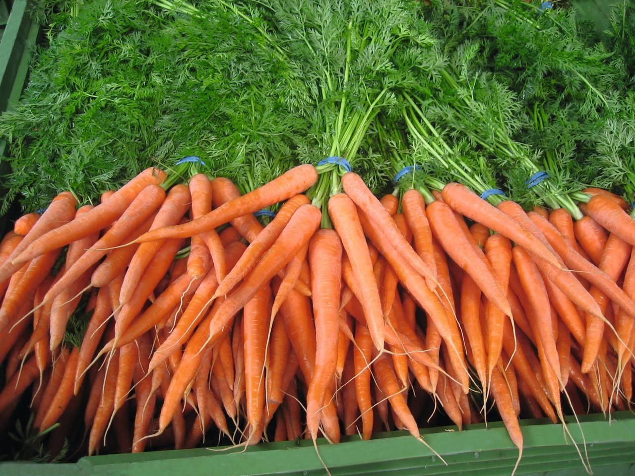 Морковь наполи f1 характеристика