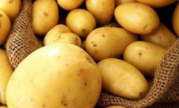 Описание сорта картофеля тулеевский — отзывы овощеводов
