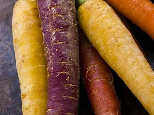 Полезна ли фиолетовая морковь? состав, польза и применение