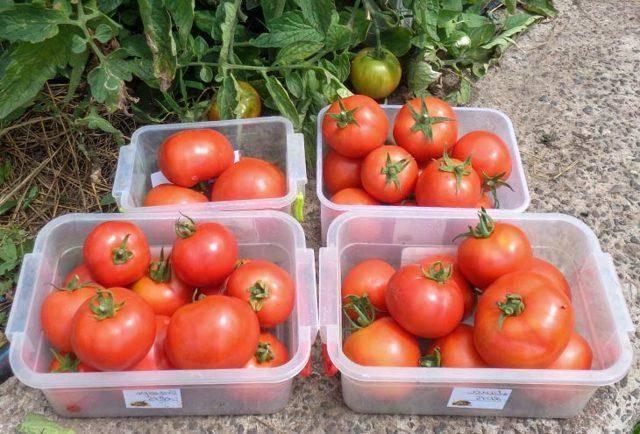 Как из помидоры получить семена