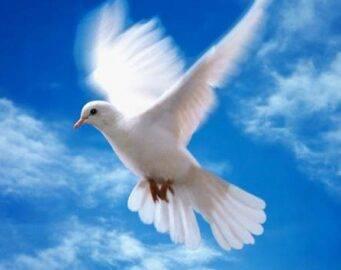 Какие болезни переносят человеку голуби