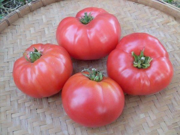 Описания лучших черноплодных томатов для открытого грунта и теплицы