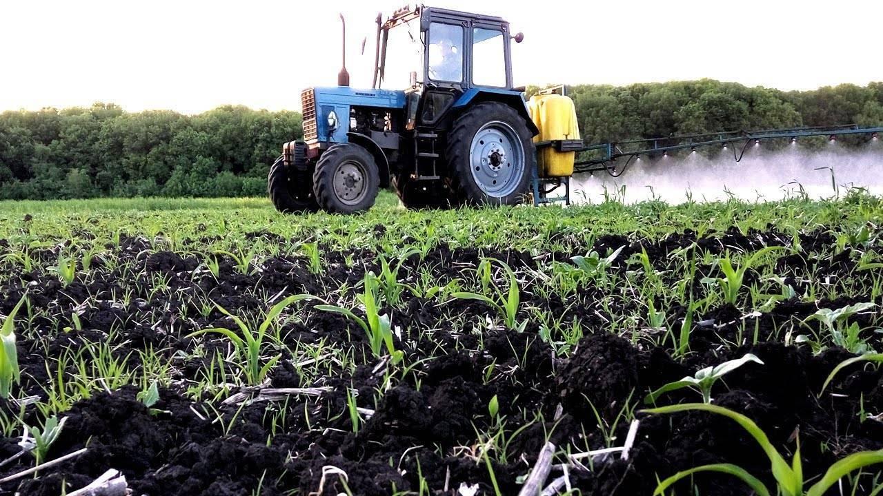 Гербициды для кукурузы — разъясняем нюансы