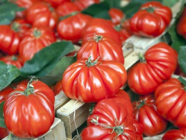 Описание томата инжир розовый и красный