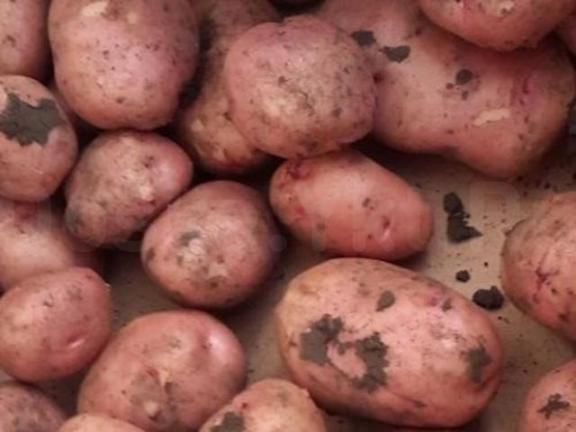 О картофеле розалинд: описание семенного сорта, характеристики, агротехника