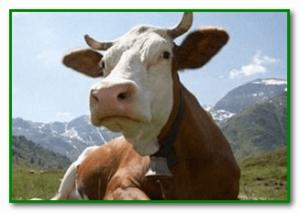 Причины и симптомы отравления поваренной солью у животных и человека