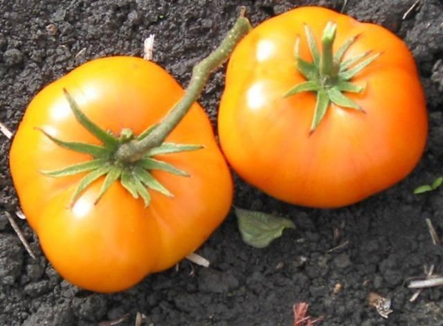 Томат гигант красный: как вырастить, описание сорта