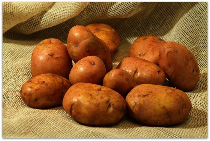 Картофель журавинка: описание и характеристика, отзывы
