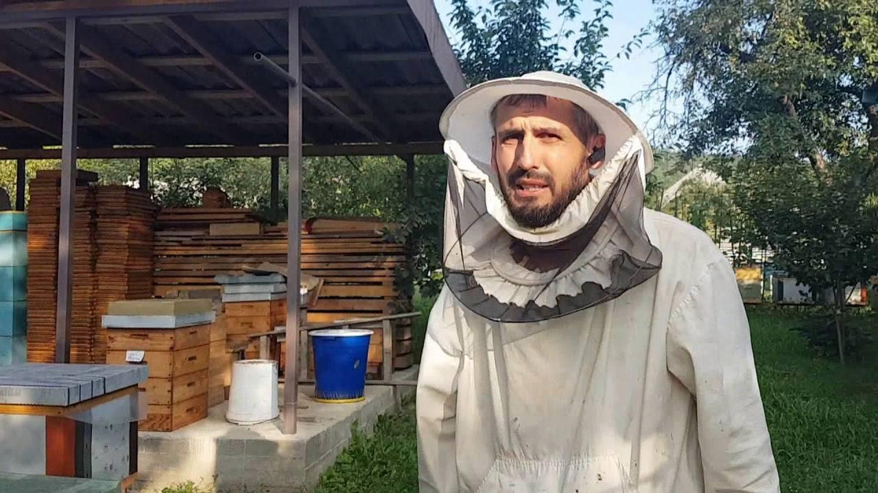 Пчелиная сушь: что это такое