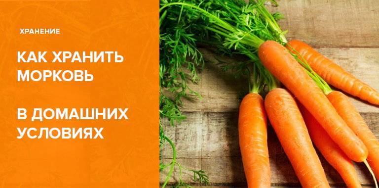 Как хранить морковь на зиму в банках 3-литрового объема или иными способами в погребе: рекомендации хозяйкам