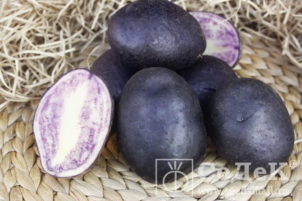 Картофель гурман: описание сорта, полезные свойства, достоинства, правила посадки и ухода, отзывы