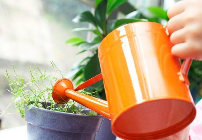 Как применять голубиный помет в качестве удобрения на даче