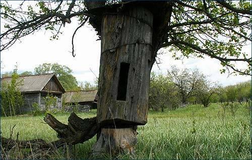 Бортничество — старинный метод пчеловедения