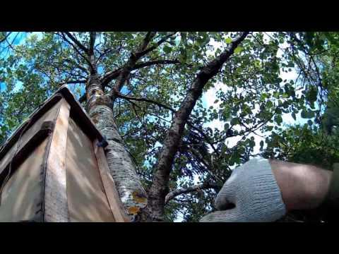 Использование препарата пчелит для подкормки пчел
