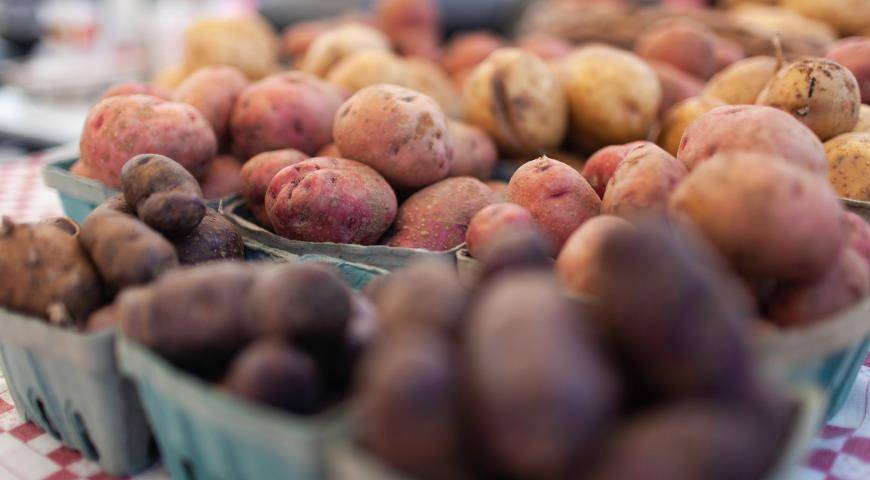 Сорт картофеля «красавчик» – описание и фото