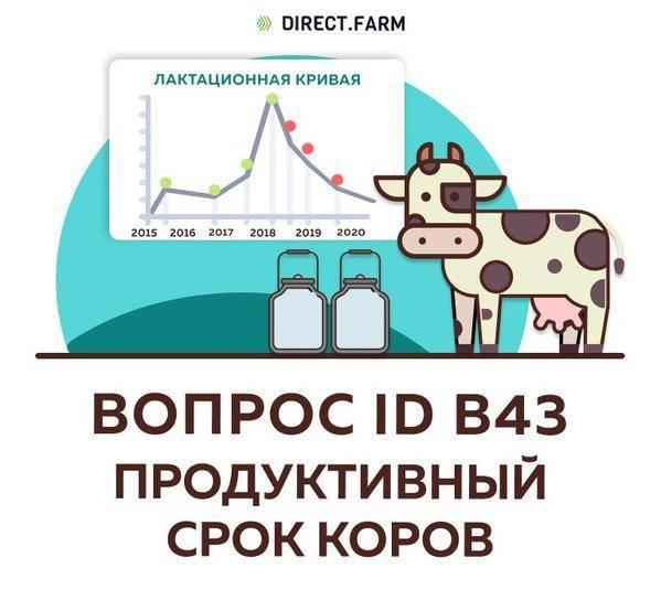 Что делать, если корова не даёт молоко или дала мало