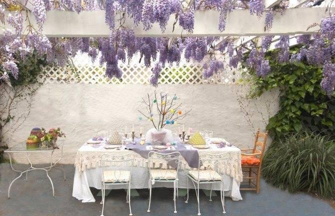 9 лучших быстрорастущих вьющихся цветов для забора, арок и шпалер на даче (27 фото)